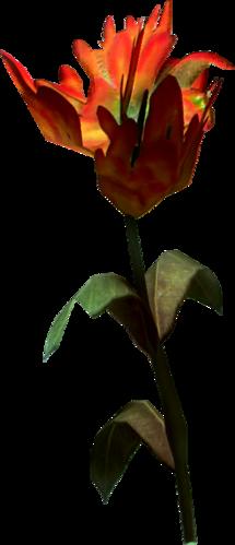 Fiore rosso di montagna
