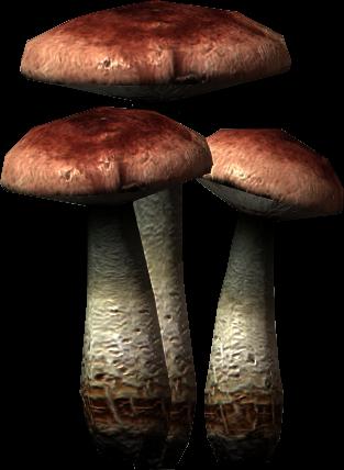 Amanita muscaria (Skyrim)