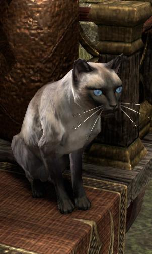 Ruby (Cat)