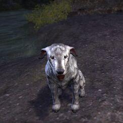 Барбас в форме пса.jpg