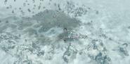 Farma Śnieżnych-Stóp (mapa) (Skyrim)