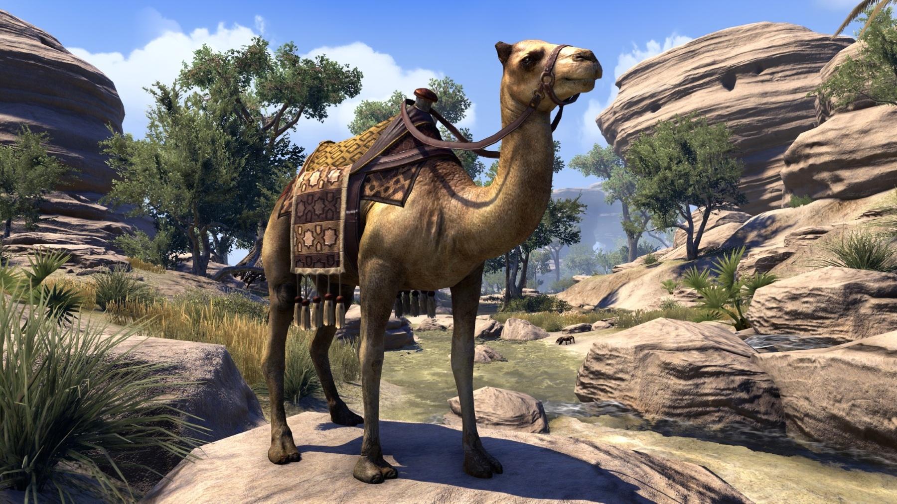 Camel (Online)