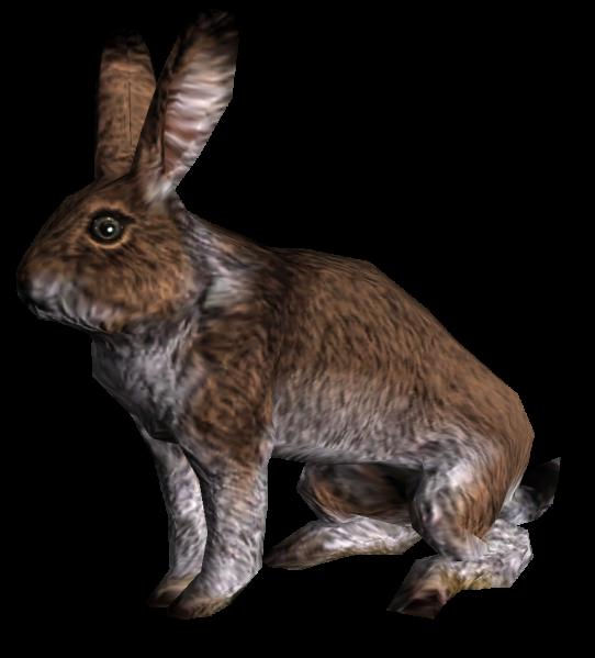 Кролик (Skyrim)