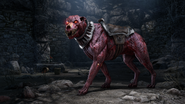The Elder Scrolls Online Greymoor Kryptawächter-Todeshund