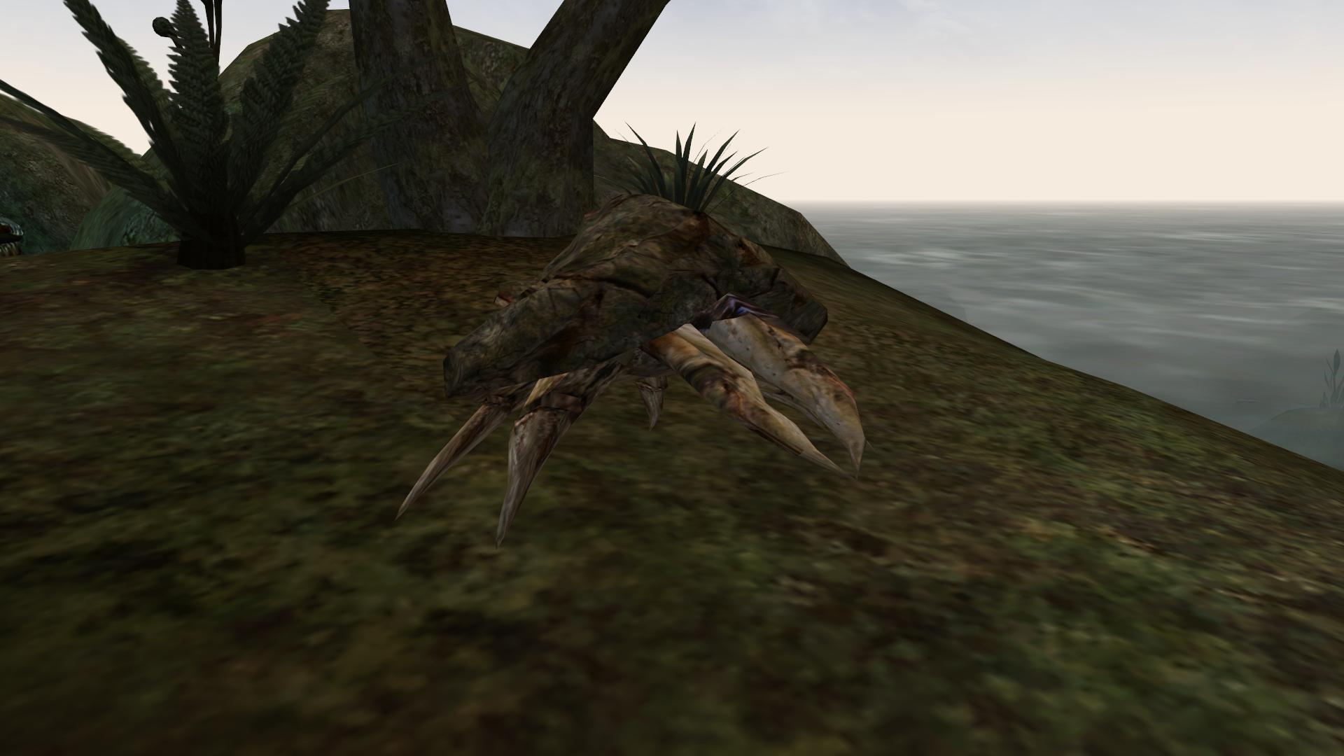 Schlammkrabbe (Morrowind)
