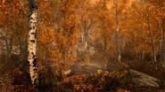 The Elder Scrolls V Skyrim Fall Forest 4k screen