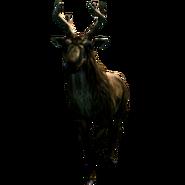 Самка великорогатого оленя