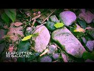DJ Galactic - Leafcutter (Original DnB Mix)