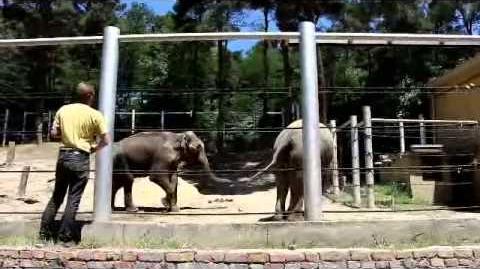 მალკასა_და_გრანდის_პირველი_შეხვედრა_The_first_meeting_of_the_elephants_Grand_&_Malka