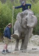 Inventur Hellabrunn 2013 Elefant Panang