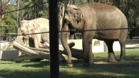 Napoli - Allo Zoo arrivano mamma e figlia elefantesse (02.11