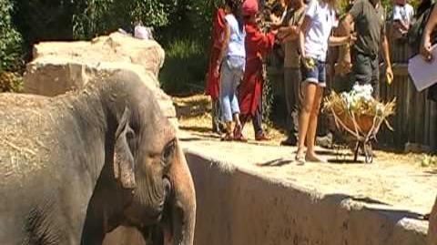 Elefanta Petita el día de su 37 cumpleaños