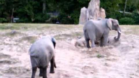 Entspannte Elefanten
