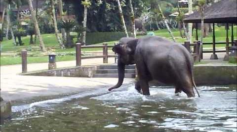 Bali_Elephant_Safari_Park