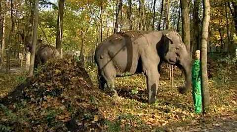 Ázsiai_elefántok_érkeztek_a_Nyíregyházi_Állatparkba