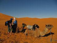 Camel ride saharadesertkingdom