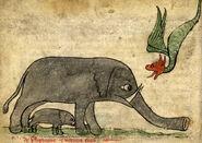 Elefant Geburt Bestiarium