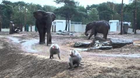 Nieuw_verblijf_voor_olifanten_en_bavianen