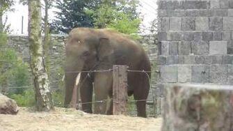 Pairi_daiza_14_08_14_elephant_asie_valentino