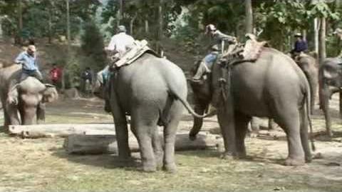 Sofimek_-_Mekong_Elephant_Camp