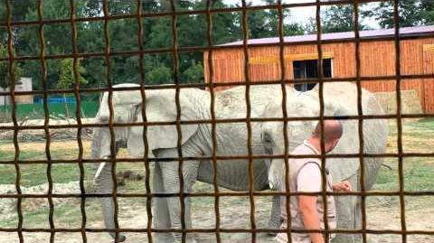 Zoo_di_Ravenna._Elefanti_da_spettacolo.