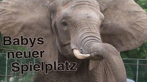 Zoo_Safaripark_Stukenbrock_-_Run,_Baby,_run