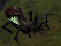 Swamp Spider 2.png