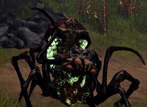 Swamp Spider image.png