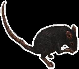 Screenshot rat creature.png