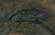 Leviathan Type Roach