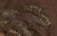 Leviathan Type Whale