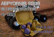 Rares aepyornis eggs