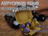 Aepyornis Egg