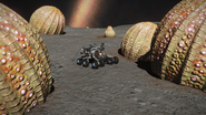 ED-SRV-Anemones-size