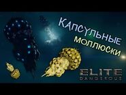 Elite Dangerous - Капсульные моллюски
