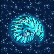 AmmoniteShell1