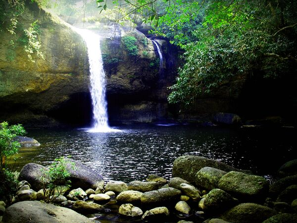 water treasure, emerald vampire, african rainforest