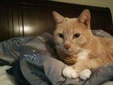 Teddy (Cat)
