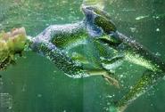 Crumple's Fish Woman