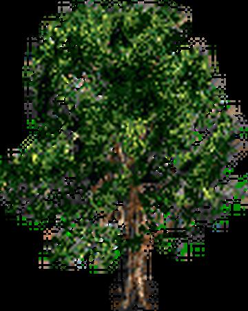 Дерево(1).png