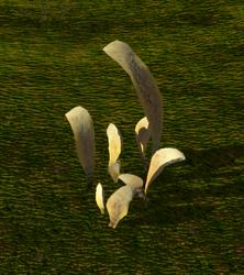 Cobra Leaves (Plant).png
