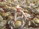 El misterio de las Verduras Gigantes