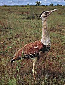 Super-Rare Bird.jpg