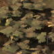 Mountain Forest.png