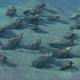 Coral Reef.png