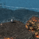 VolcanicCoastalWaters.png