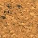 Dry Soil.png