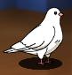 Star Medal Dove
