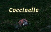Mob Coccinelle.jpg