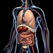 Anatomy 15.jpg